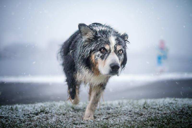 Image of dog running in the falling snow overlooking near the beach. Stock Photography Free for Commercial Use.