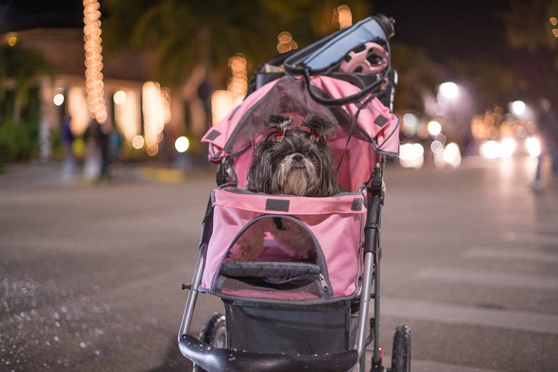 Shaggy dog in pink stroller on street off leash. Stock Photography Free for Commercial Use.