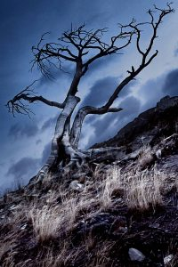 Hilltop haunting looking dead tree. Stock Photography Free for Commercial Use.