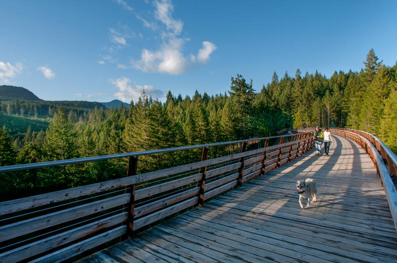 Man walking dog on trestle on clear sunny day on Vancouver Island. Stock Photography Free for Commercial Use.
