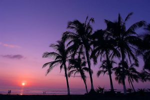 Tropical Sunset with purple sky and palm trees. Stock Photography Free for Commercial Use.