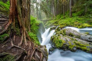 Running creek with blur with forest waterfall. Stock Photography Free for Commercial Use.